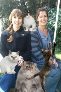 Kate's assistants with cats